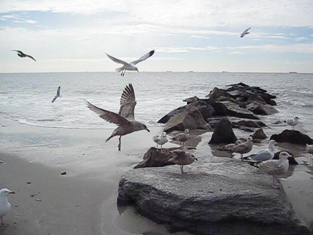 Birds 3-3_0013